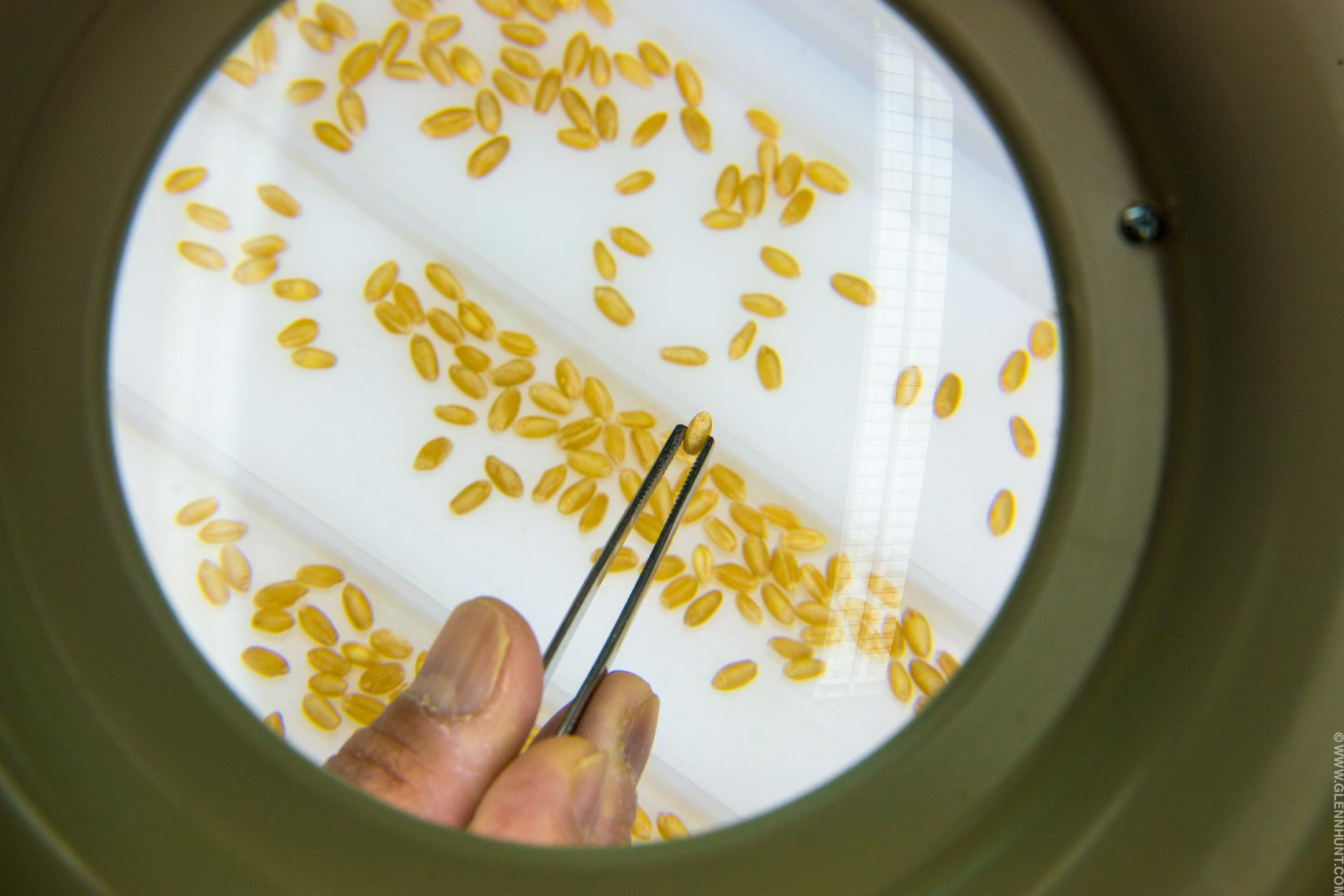 Viterra grain quality laboratory, Adelaide.