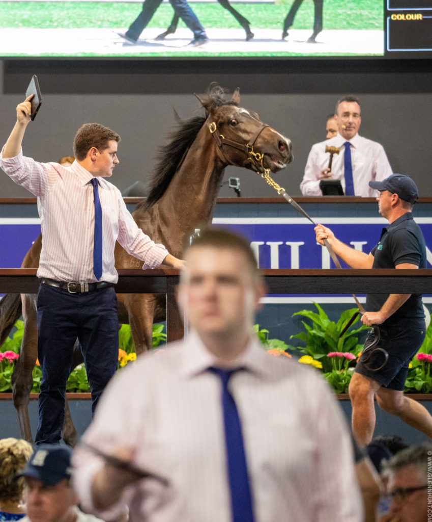 GOLD COAST MAGIC MILLIONS YEARLING SALES